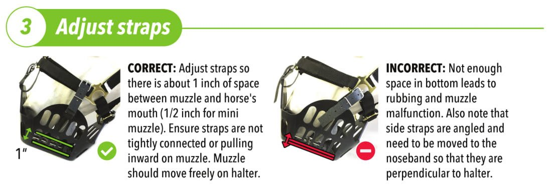Adjust the straps so that there's about 1 inch of space between the muzzle and the horse's mouth (1/2 an inch for the small muzzle). Ensure straps are not tightly connected or pulling inward on the muzzle. The muzzle should move freely when attached to the headcollar.