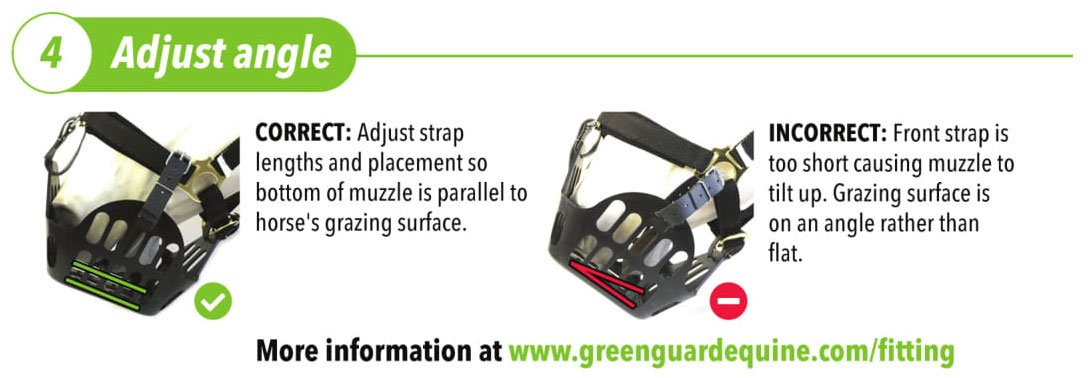 Adjust the strap lengths and placement so that the bottom of the muzzle is parallel to the horse's grazing surface.